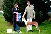AKC Sierra Slopes Ibizan Hound Specialty Show Best of Winners