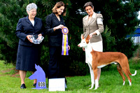 AKC Sierra Slopes Ibizan Hound Specialty Show Best of Breed Winner